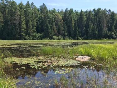 Beaver lakes